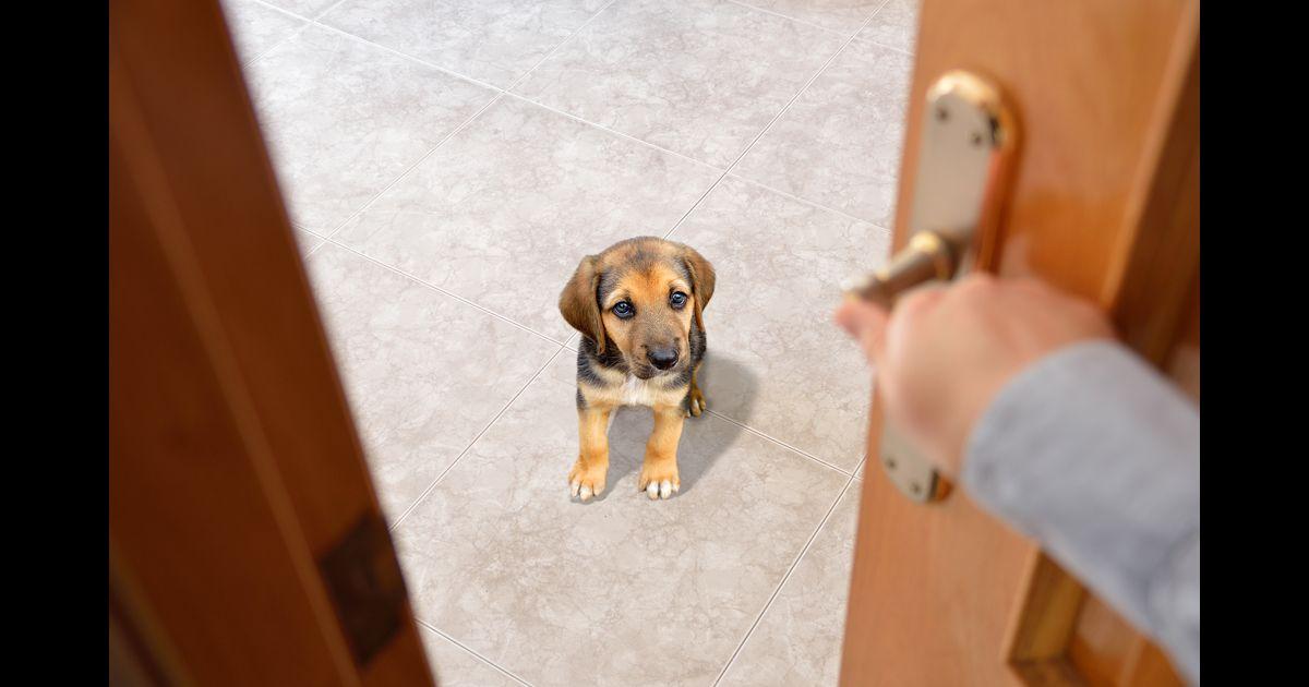 Votre absence rend-elle votre chien malheureux